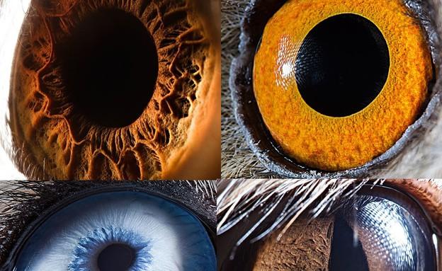 עיניים של חיות - חיצונית (צילום: dailymail.co.uk)