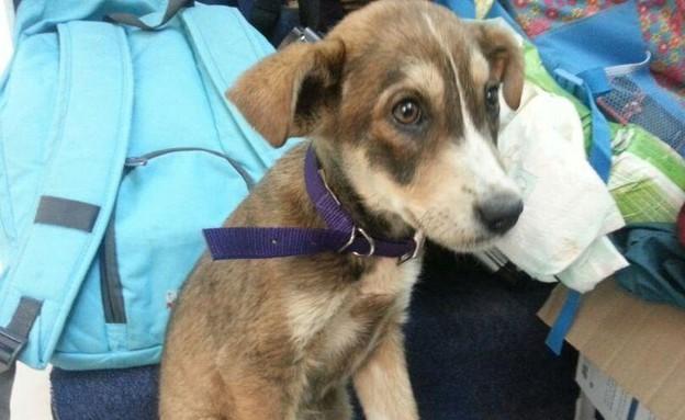 כלבה שהוצלה על ידי מוקד החירום של תנו לחיות לחיות