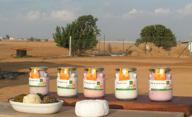 , מחלבות יוגרטים- צילום צאלה גורדנציק (צילום: צאלה גורדנציק)