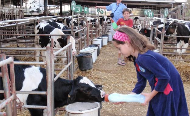 שביל פרות החלב אפרת ברנדס, מחלבות