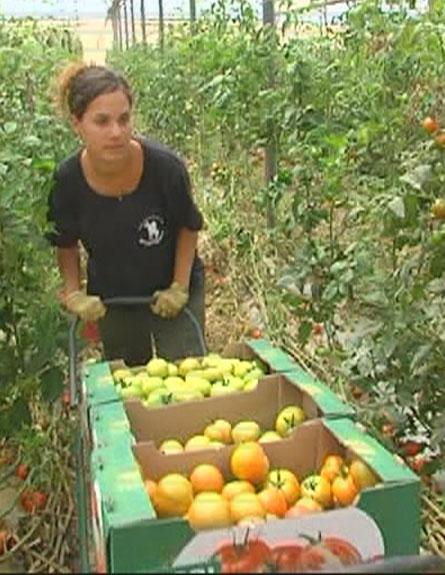 צפו: החקלאיות הצעירות כובשות את הנגב (צילום: חדשות 2)