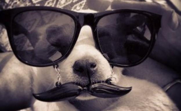 צחוק - כלב מצחיק (צילום: האח הגדול)