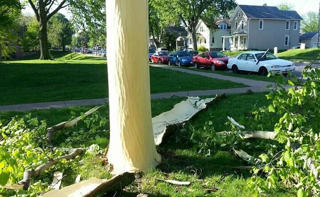 עץ שהופשט מקליפתו על ידי ברק (צילום: huffingtonpost.com)