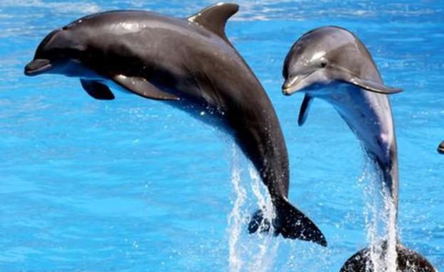 דולפינים יוכרו כאושיות לא אנושיות