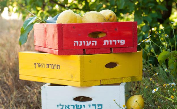 דנה ישראלי, ארגזים (צילום: דנה ישראלי)