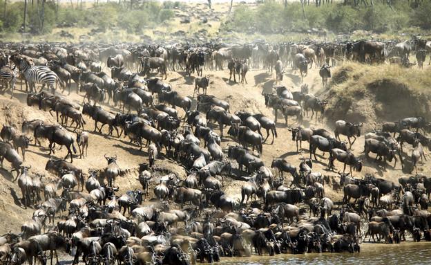 קניה, אימג'בנק טינסטוק (צילום: אימג'בנק / Thinkstock)