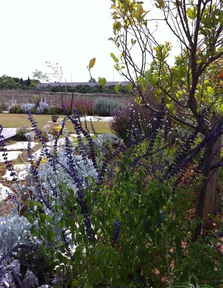 שרון איגר, חצר צמחייה, צילום שרון איגר