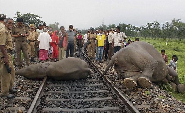 הרכבת דרסה ארבעה פילים