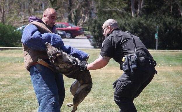 המשטרה מצדיעה לכלב