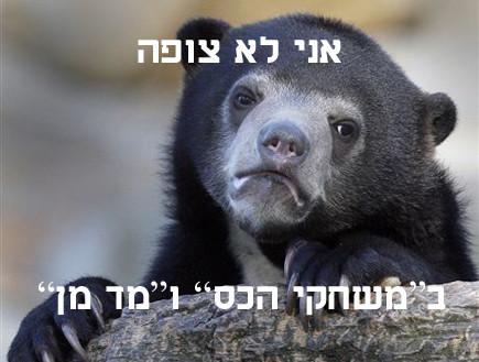 דוב הווידוי