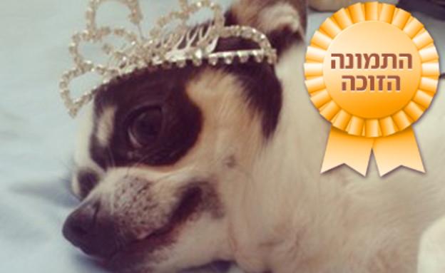 משטר- כלב עם כתר ופלאח זוכה (צילום: האח הגדול)