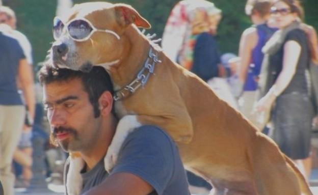 כלב המהומות המגניב מאיסטנבול