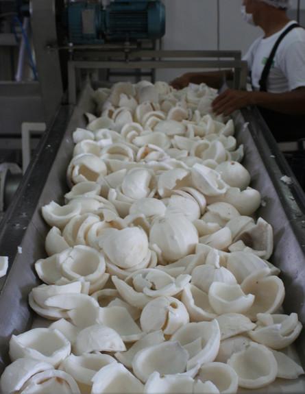 שמן קוקוס תהליך הייצור (צילום: חברת ג'מוקה, יבואנית tropics best )