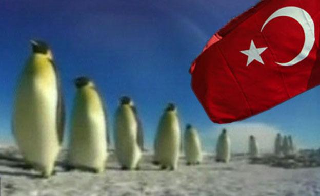 מי צריך הפגנות -  יש פינגווינים (צילום: CNN)