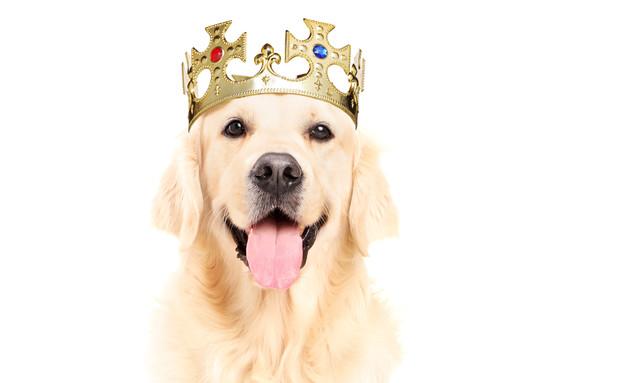 כלב עם כתר על הראש (צילום: אימג'בנק / Thinkstock)