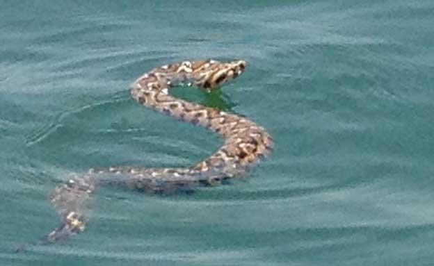 כך תיזהרו מנחשים (צילום: סמי יהושוע)