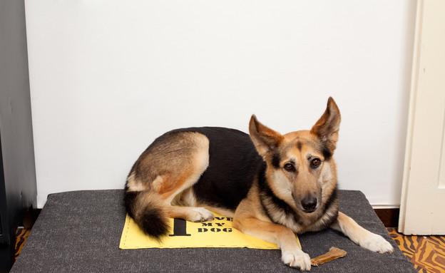 עיצוב סלון, כלב (צילום: בועז לביא)