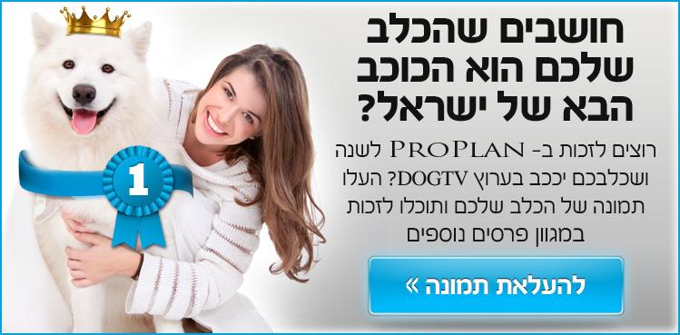 הפנייה לפעילות פייסבוק - הכלב הבא של ישראל