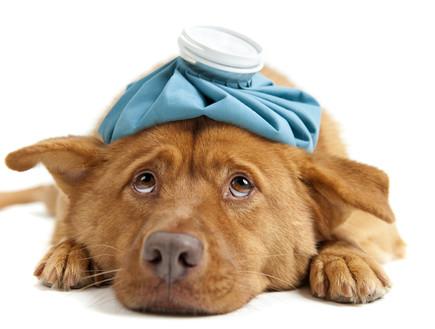 מותג חדש משיעול ועד דיכאון: 8 תופעות נפוצות אצל כלבים LK-35