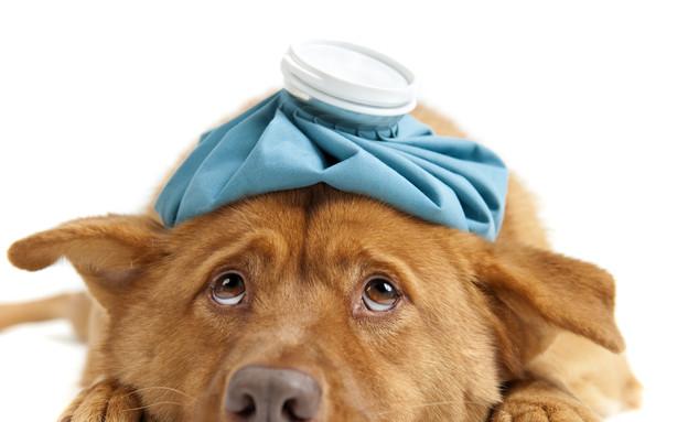 כלב חולה (צילום: אימג'בנק / Thinkstock)