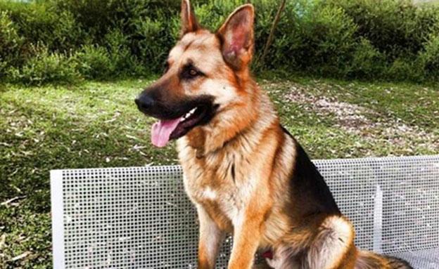 מי ראה? הכלב רוקי, ארכיון (צילום: רן אליהו)