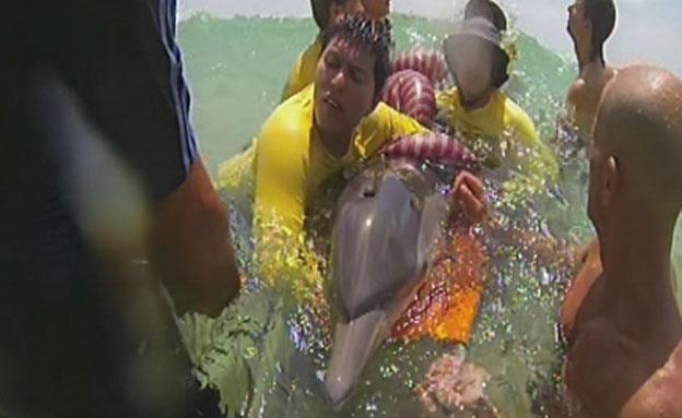 הצלת דולפין (צילום: חדשות 2)