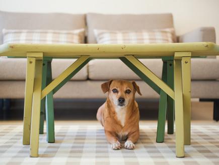 בית באורנית, סלון כלב