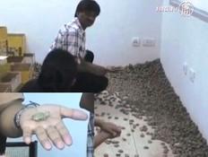 אלפי צבים מוברחים בכלכתה (וידאו WMV: NTD)