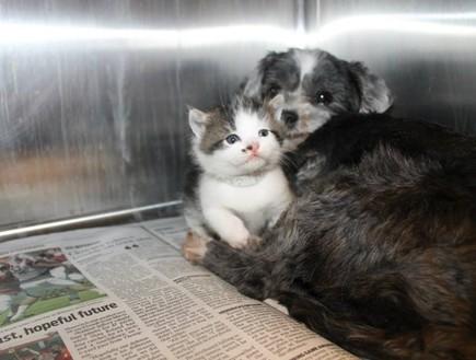 כלב וחתול, חיבוק
