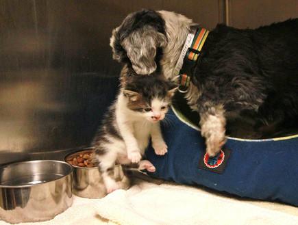 כלב וחתול, אוכל