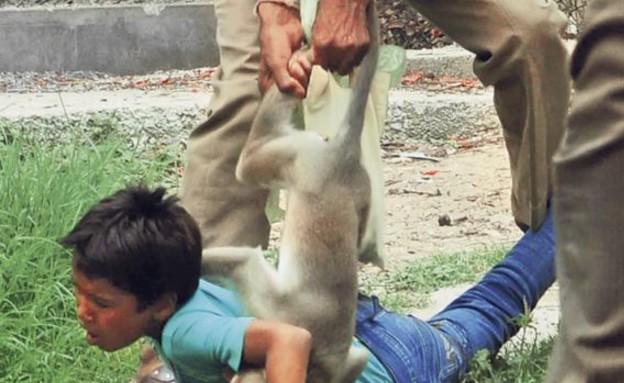 ילד הותקף על ידי קוף (צילום: dailymail.co.uk)