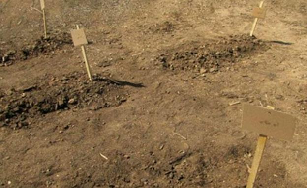 הקברים שנחשפו בסוריה (צילום: א-נהאר)