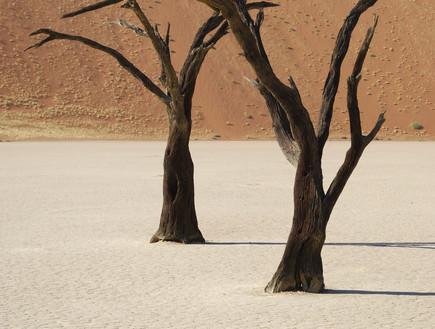 נמביה, יערות מוזרים, קרדיט אימג'בנק טינסטוק