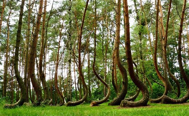 פולין 2, יערות מזורים