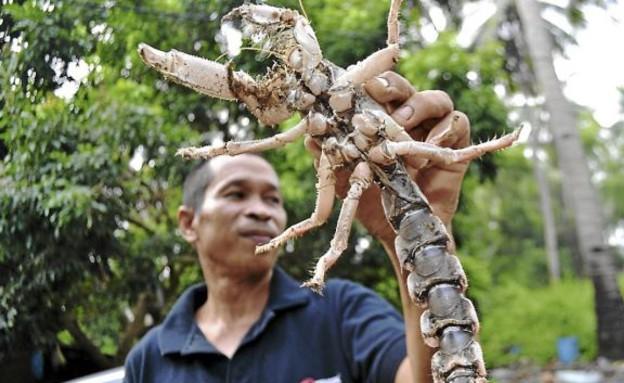 יצור מוזר שהתגלה בג'ונגל במלזיה (צילום: thestar.com)