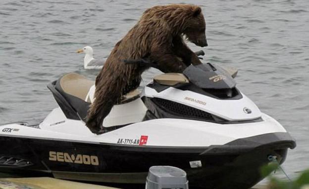 דוב על ג'ט סקי