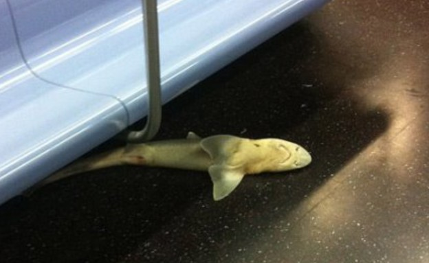כריש ברכבת התחתית בניו יורק (צילום: nydailynews.com)