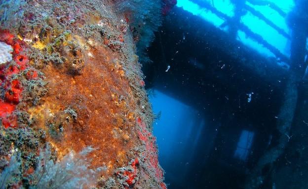 , אתרי צלילה, קרדיט אמיר גור ואיציק יוגב, בתוך הגו (צילום: אמיר גור ואיציק יוגב)