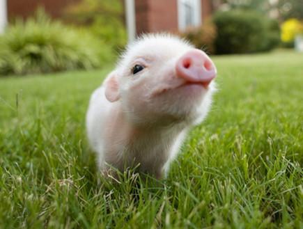 מפואר החיות הכי חמודות בעולם ZW-12
