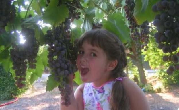סיור בציר ענבים במי קדם