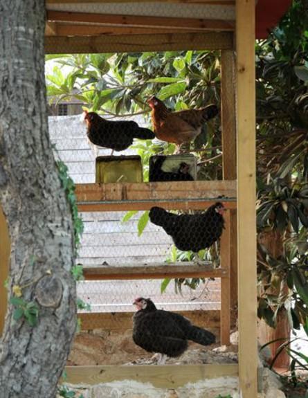 בתים לחג, רנה דוקטור חוץ תרנגולות, צילום שי אדם