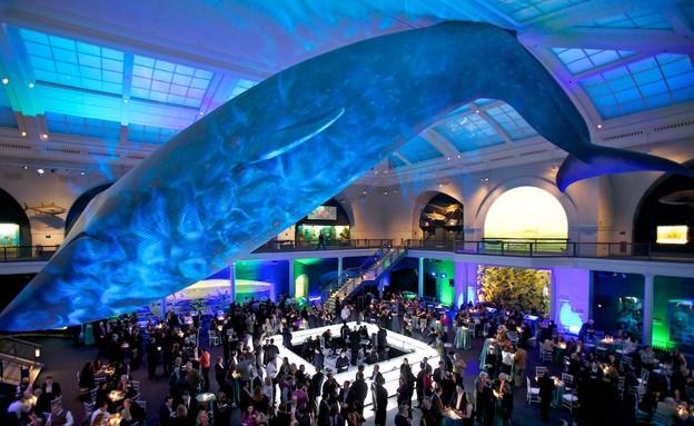 המוזיאון האמריקני לתולדות הטבע, מוזיאונים בעולם, קרדיט theclassytr (צילום: theclassytr)
