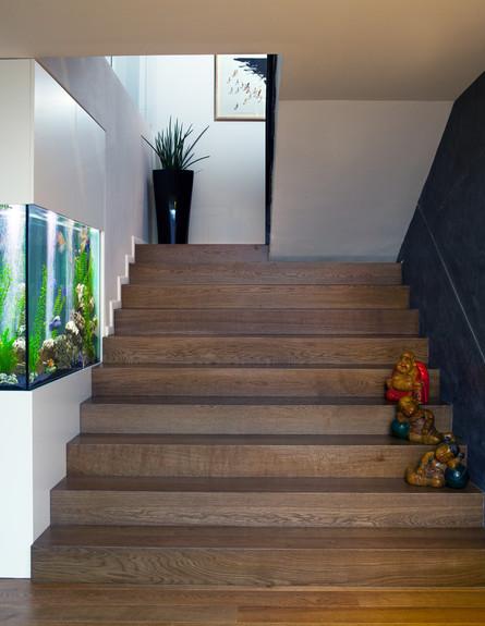 טופלסקי, מדרגות פרקט (צילום: עוזי פורת)