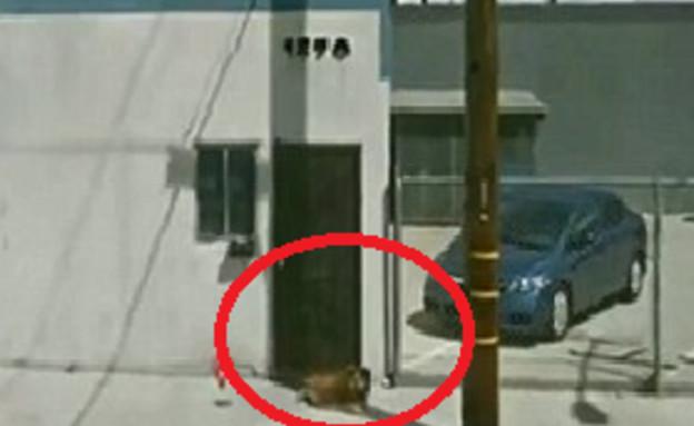 הכלב אותר בגוגל סטריט וויו