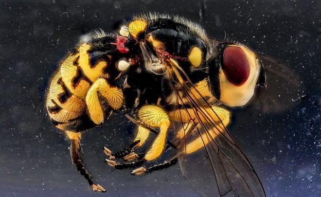 תקריבי חרקים
