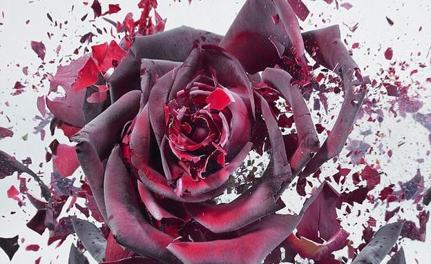 הפרחים הקפואים של מרטין קילמס (צילום: מרטין קילמס / dailymail.co.uk)