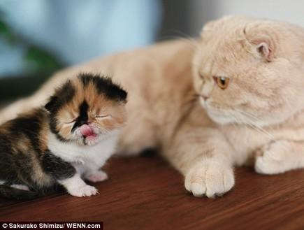 החתול הכי חמוד בעולם
