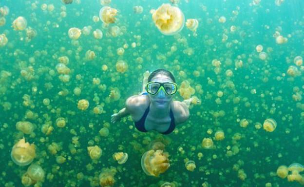 שוחה עם מדוזות