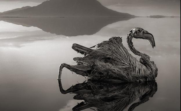 אגם נטרון בטנזניה (צילום: ניק ברנדט / gizmodo.com)