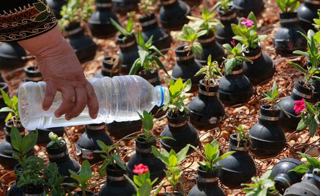פלסטינית משקה את עציצי הרימונים (צילום: רויטרס)